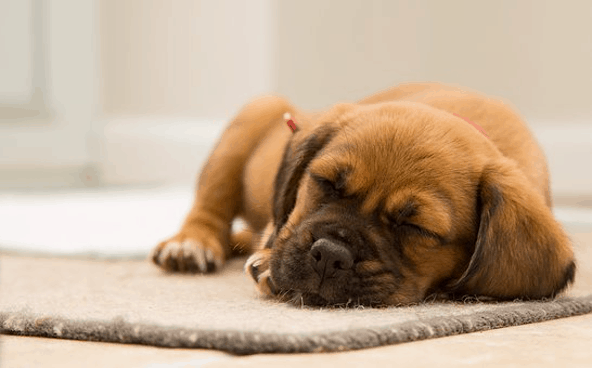 Budget-Conscious Cleaning Tips for Pet Owners